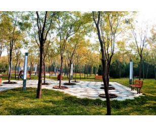 万罗山路园林绿化改造工程