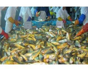 海产品分拣